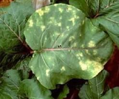вредители на листьях комнатных растений фото
