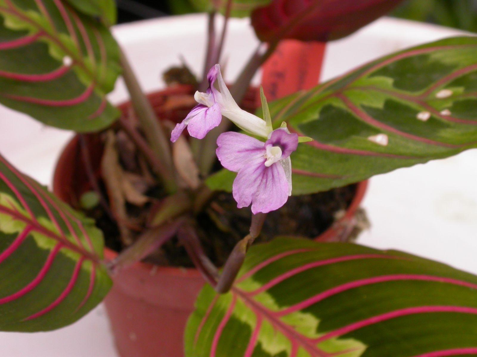 цветки домашние фото